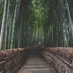 The Ultimate Bucket List for Japan: 30 + best things to do in Japan