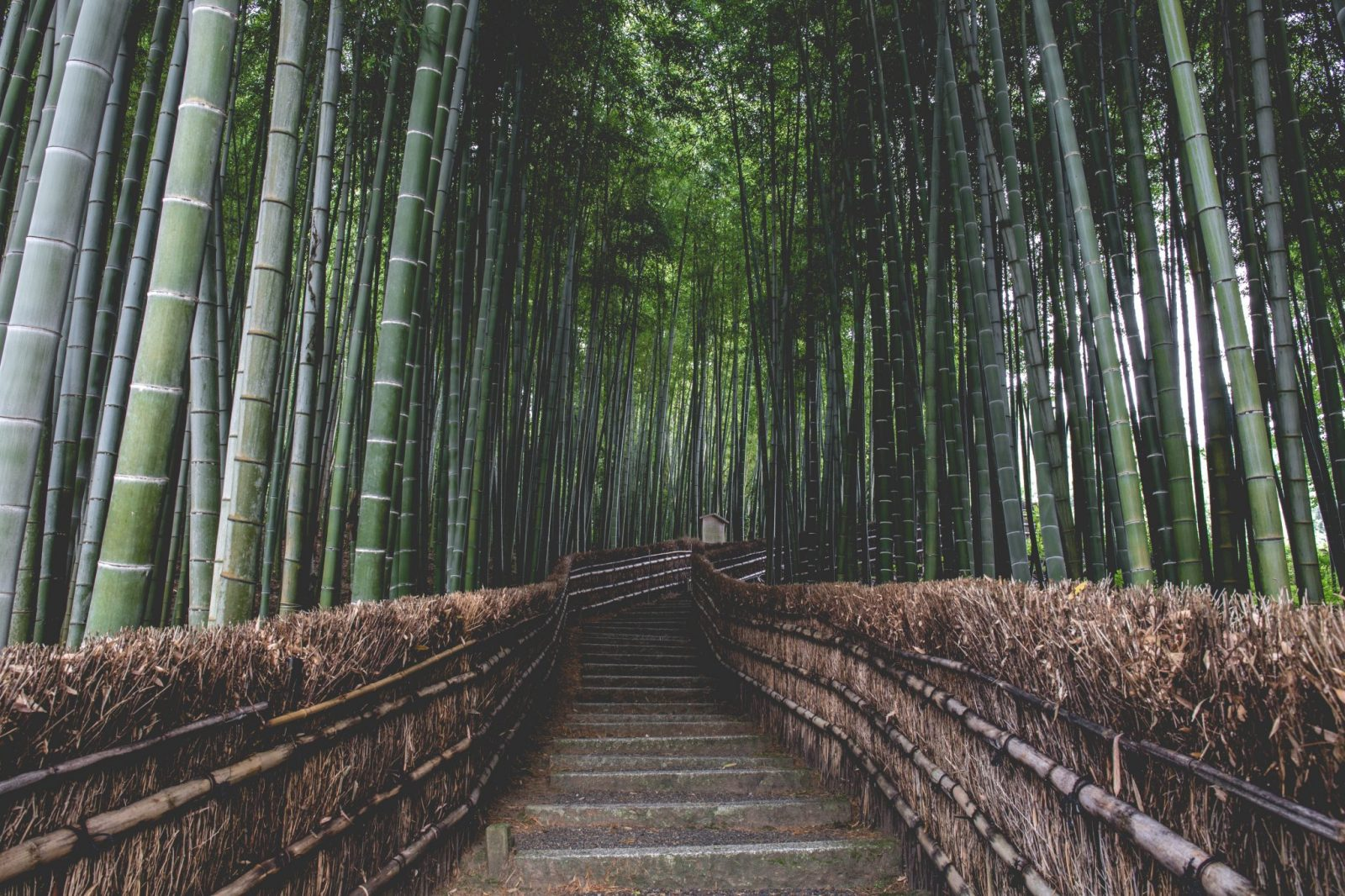 Japan Bucket List | The Arashiyama Bamboo Grove