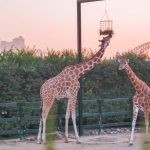 Taronga Zoo: The Roar and Snore Experience