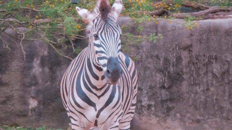 Taronga Zoo Roar and Snore Experience